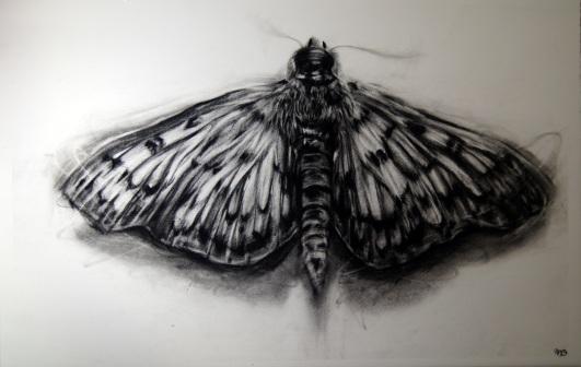 Moth found in kitchen