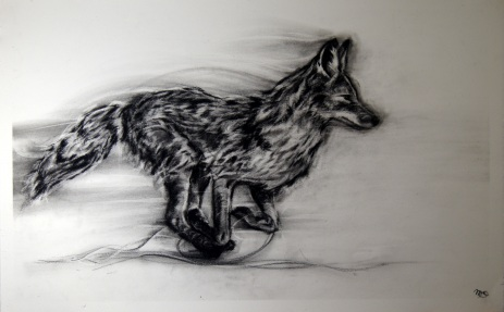 Coyote in the Wind