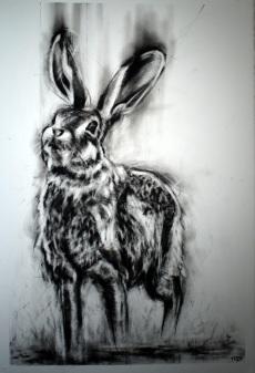 Scrub Hare II